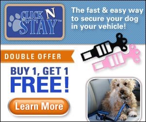 Click N Stay Clips for a Seat Belt