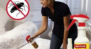 Fabriclear Kills Bed Bugs By Contact