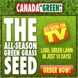 Canada Green Grass All Season Hardy Grass Seed