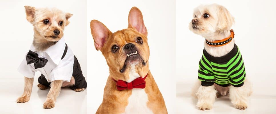 Kane & Couture Designer Dog Apparel and Accessories