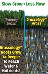 Grassology – Scientific Breakthrough Seed For Low-Maintenance Grass