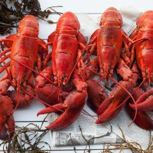 Buy Live Lobster Online from Maine Lobster