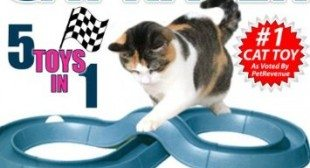 Crazy Cat Racer Ball and Track Interactive Game