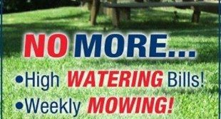 Grassology Scientific Breakthrough Grass Seed Low-Maintenance Grass!