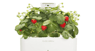 Click and Grow Enjoy Homegrown Herbs