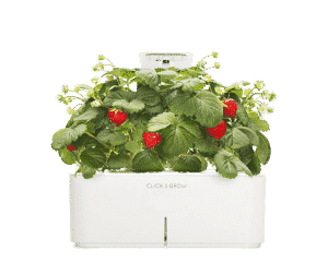 Smartpot Strawberries