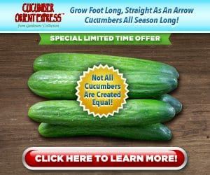 Cucumber Orient Express Grow Cucumbers Special Limited Time Offer!