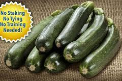 Zooming Zucchini   Grow Zucchins a Foot Long