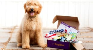 Pupbox Toys, Treats, and Training for your Puppy on Shark Tank