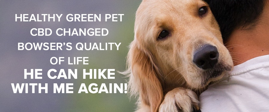 cbd for pet dogs